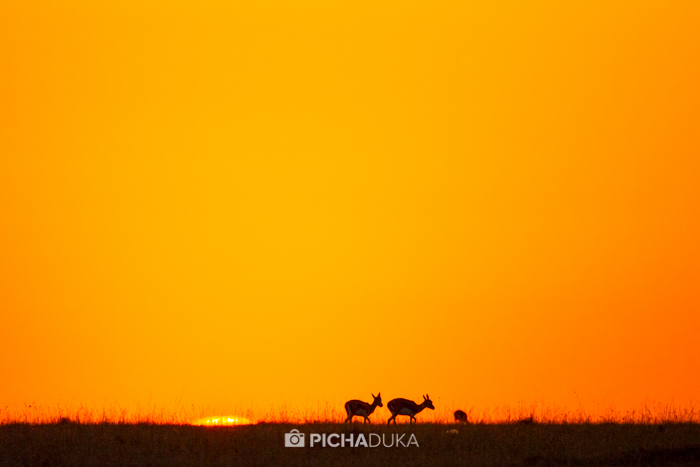 Masai Mara : 7 Days in the 7th Wonder