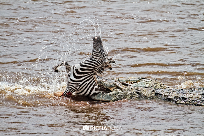 Canon Kenya Photo Awards 2016 Winner, Nature Category