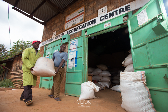 Josephat Muriungi (L) helps Josephat Muthomi deliver green grams to Mukothima Grain Aggregation Centre in Tharaka North Sub County, Kenya on 19th July 2016. With help from Agra, farmers in the area have formed organisations to help them get better prices for their harvest by selling in bulk. Farmers deliver their grain to aggregation centres like this one in Mukothima from where they sell their grain.