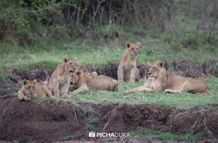 Nairobi_National_Park-102