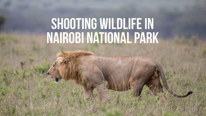 Tips for Shooting Wildlife in Nairobi National Park