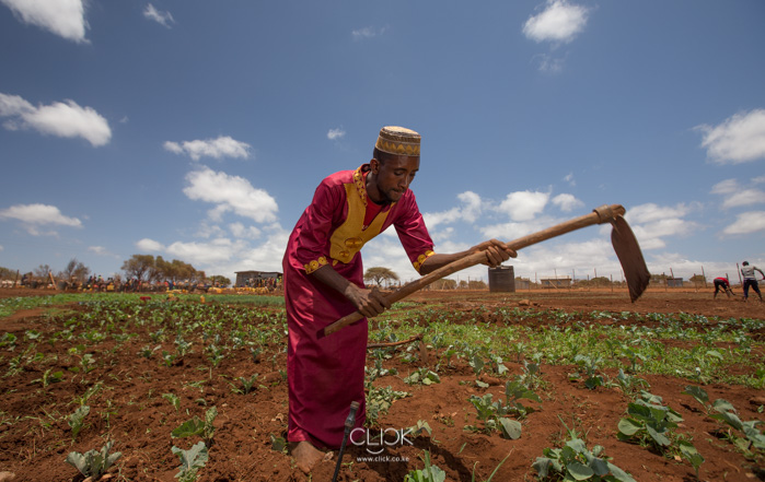 Jarso Huka farming in Dirib, Marsabit, on 16th September 2017.