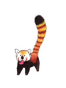 Red Panda 3