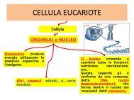 8 CELLULA EUCARIOTE ORGANULI E NUCLEO