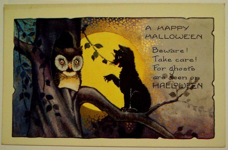 owl-and-black-cat-1