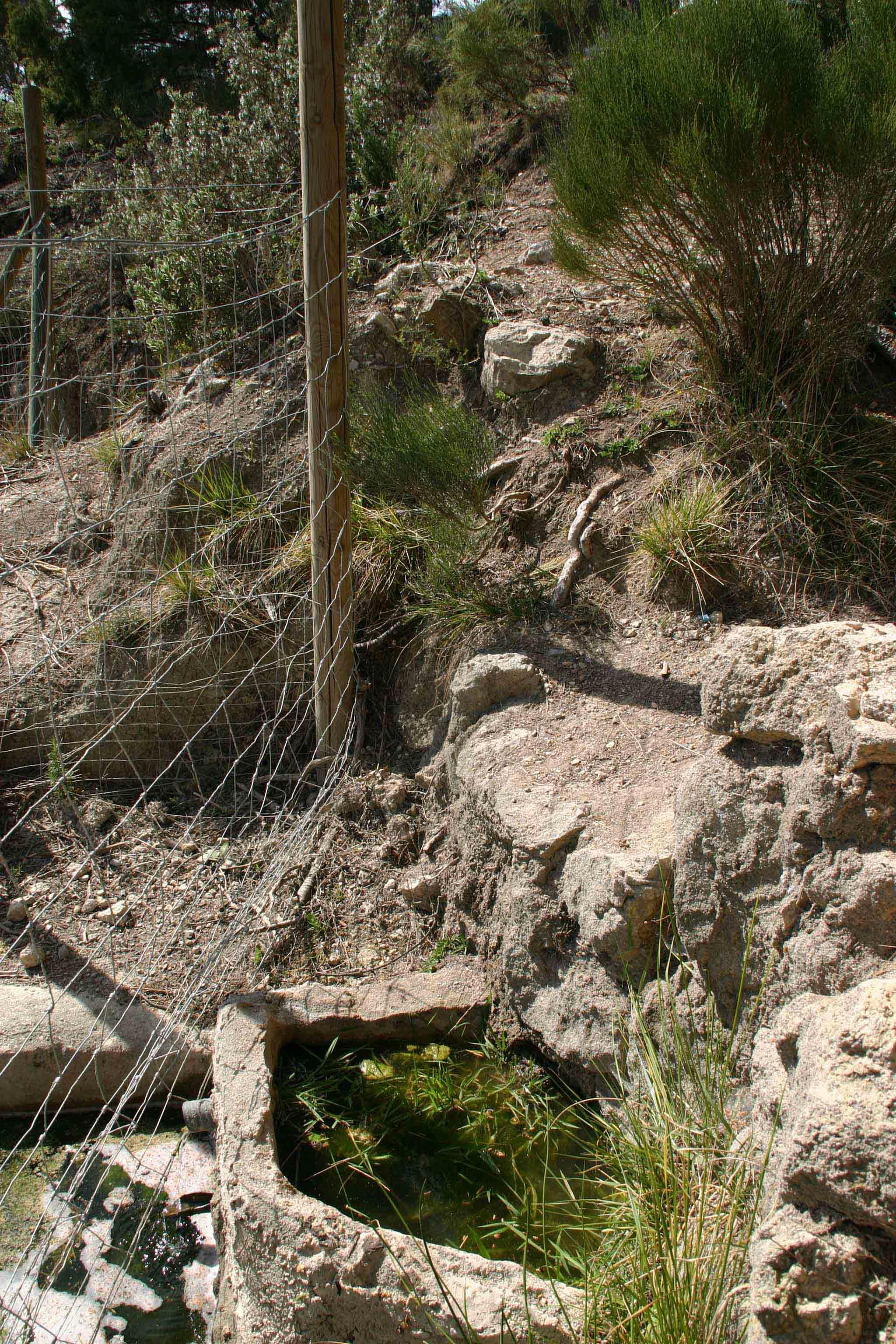 Common toad habitat on the mountain