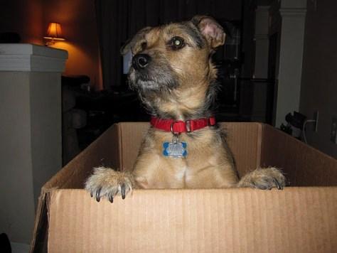 Edgar - Patterdale Terrier Mix
