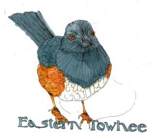 M WOOD NATURE BIRD EASTERN TOWHEE