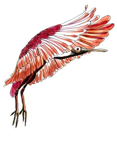 M WOOD NATURE BIRD ROSEATE SPOONBILL
