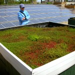 solar panels and indigenous ground cover plants