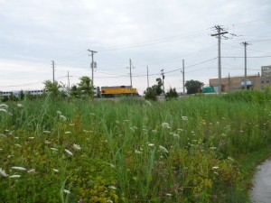 view of passing train from the prairie-wetland