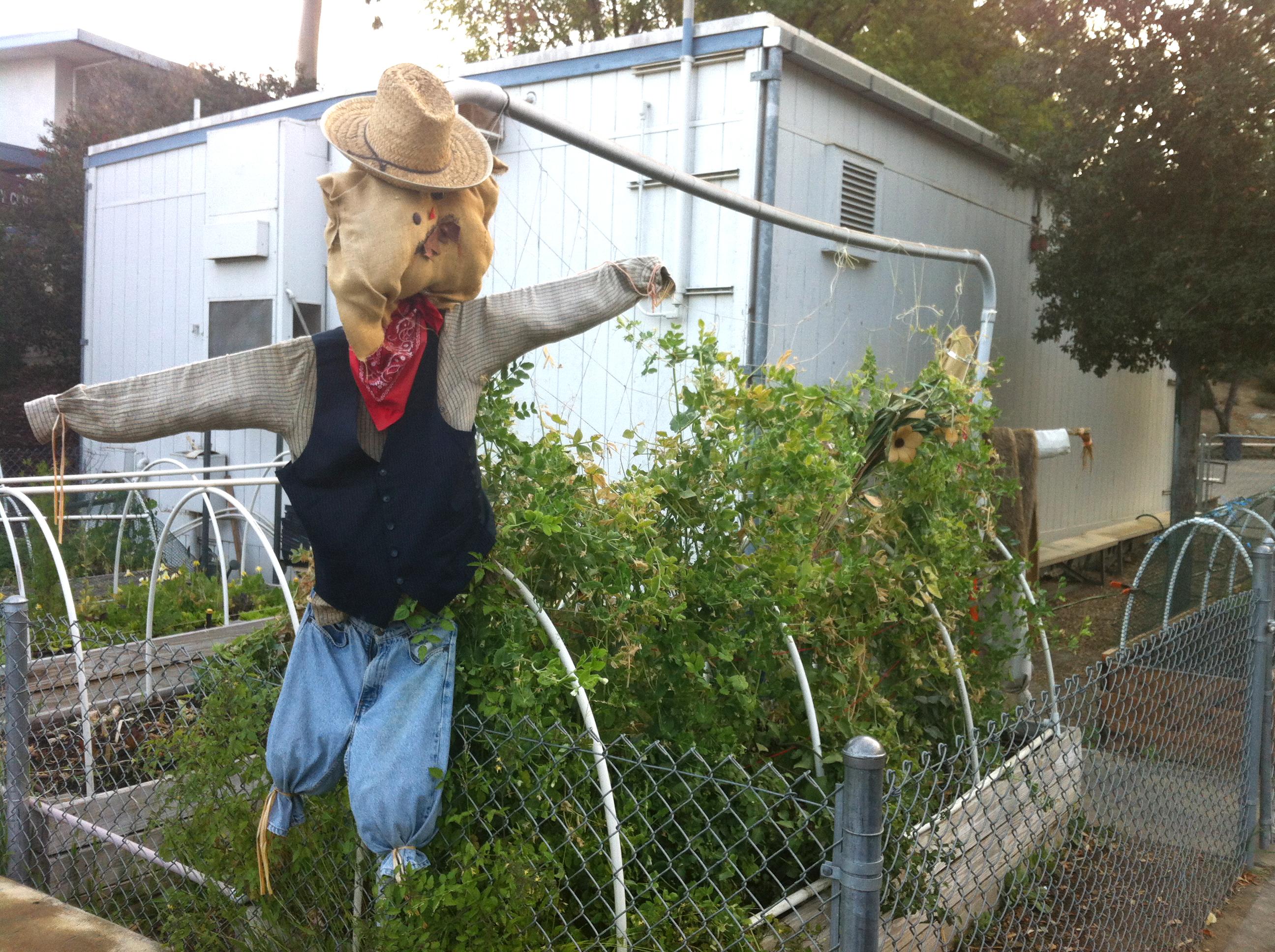 Teaching The Life Cycle Of A Bean Plant Edible School Garden