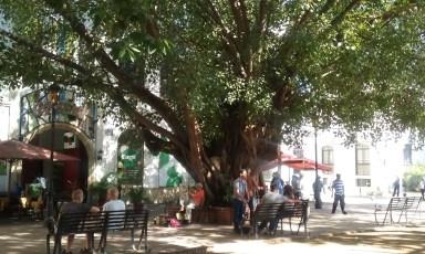 Guardian tress - Plaza Cristobal Colón