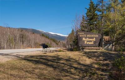 moose crossing Route 16, Pinkham Notch with Mount Washington in background