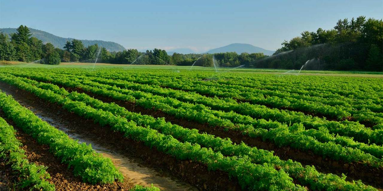 Sustaining Local Farms
