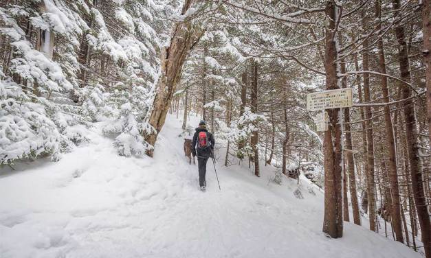 Quiet Winter Hikes in the Whites