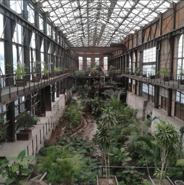 archivo-mxcity-biblioteca-vasconcelos-invernadero