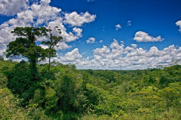 Dschungel-I