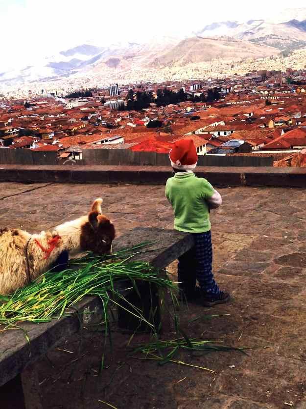 mein Lama und meine Stadt