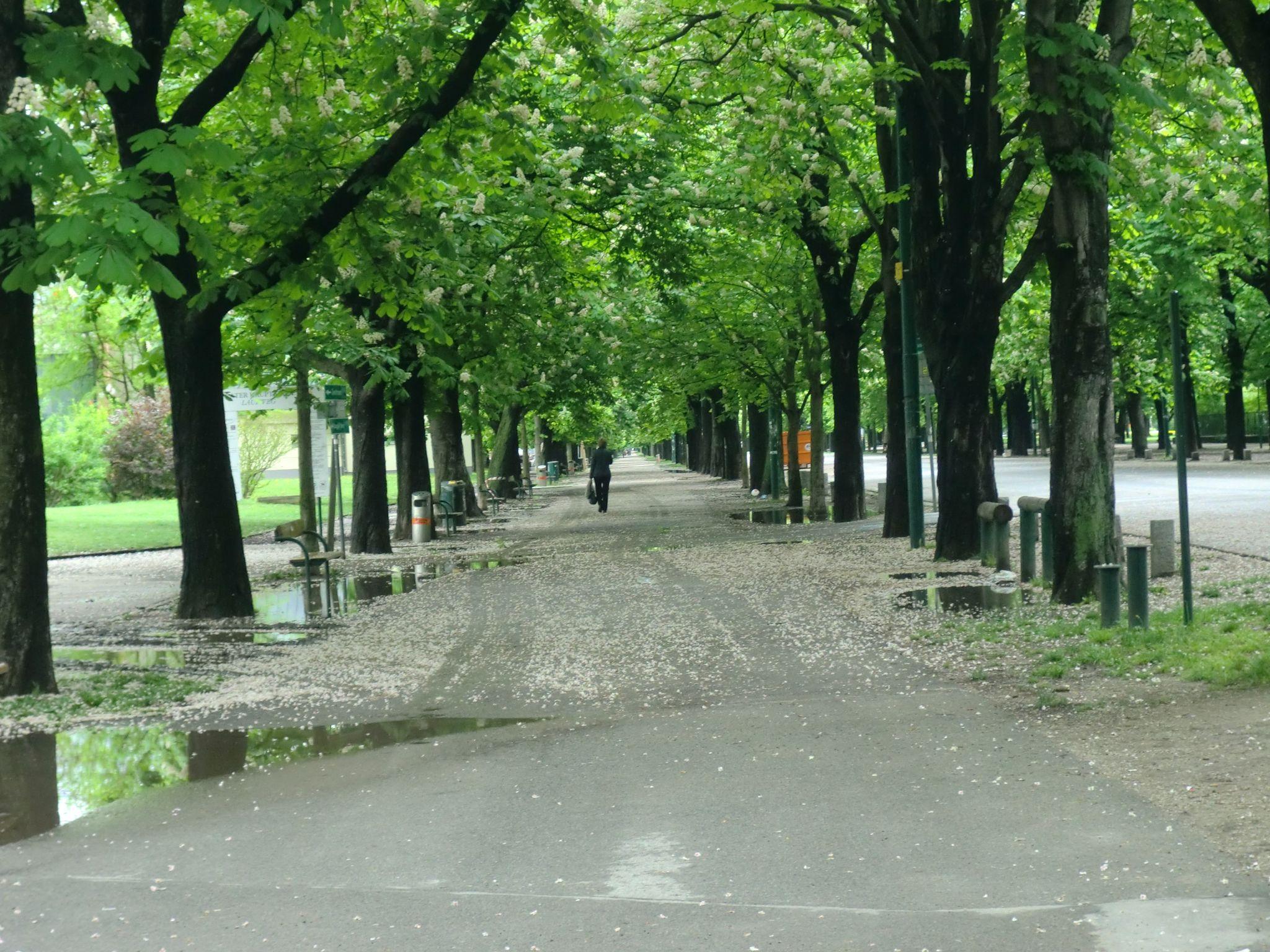 Vienna park 34 1440x1080 - Vienna: elegant beauty