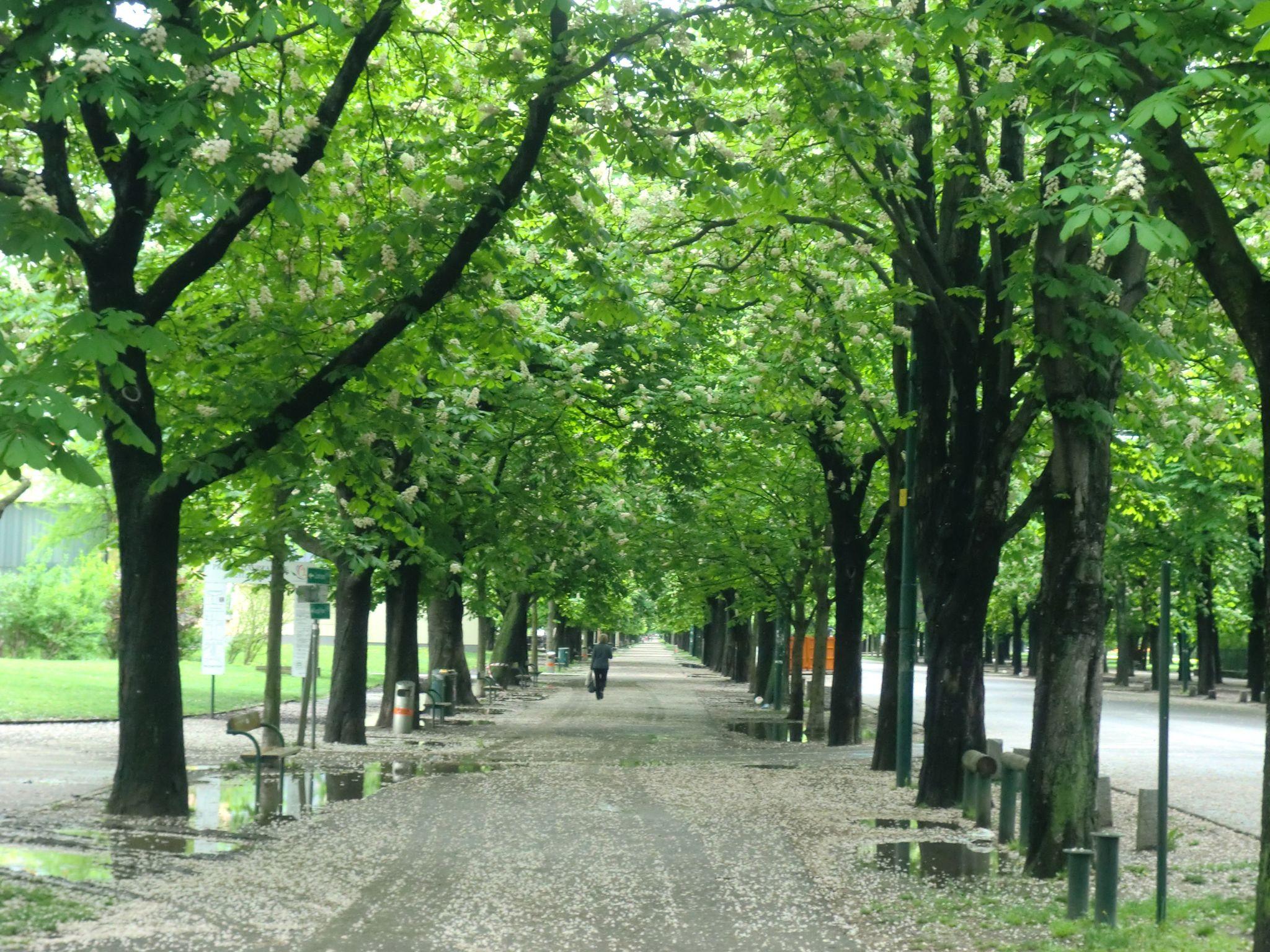 Vienna park 35 1440x1080 - Vienna: elegant beauty