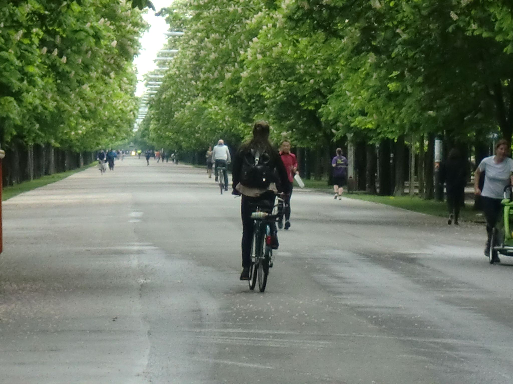 Vienna park 36 1440x1080 - Vienna: elegant beauty