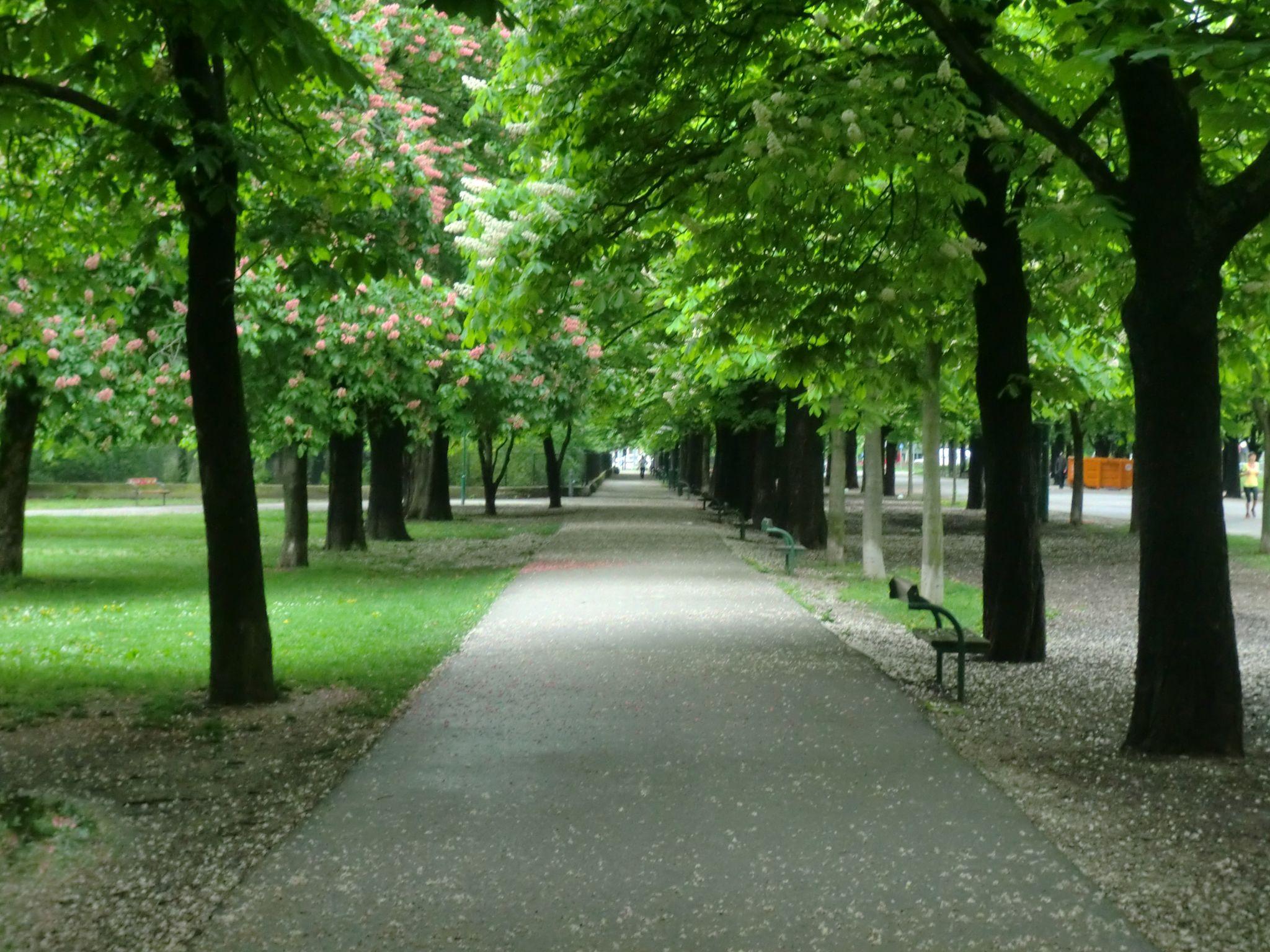 Vienna park 38 1440x1080 - Vienna: elegant beauty