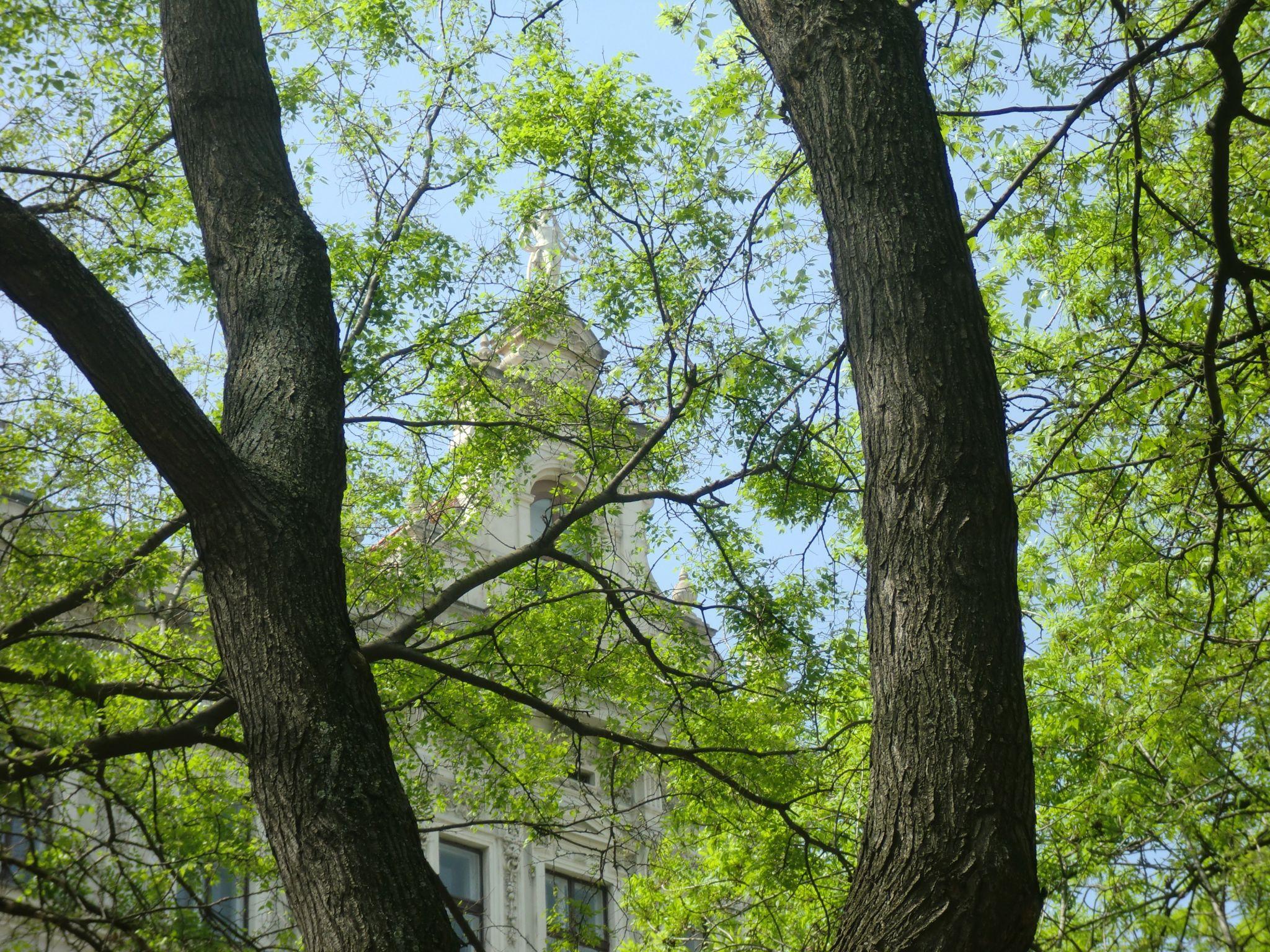 Vienna park 4 1440x1080 - Vienna: elegant beauty