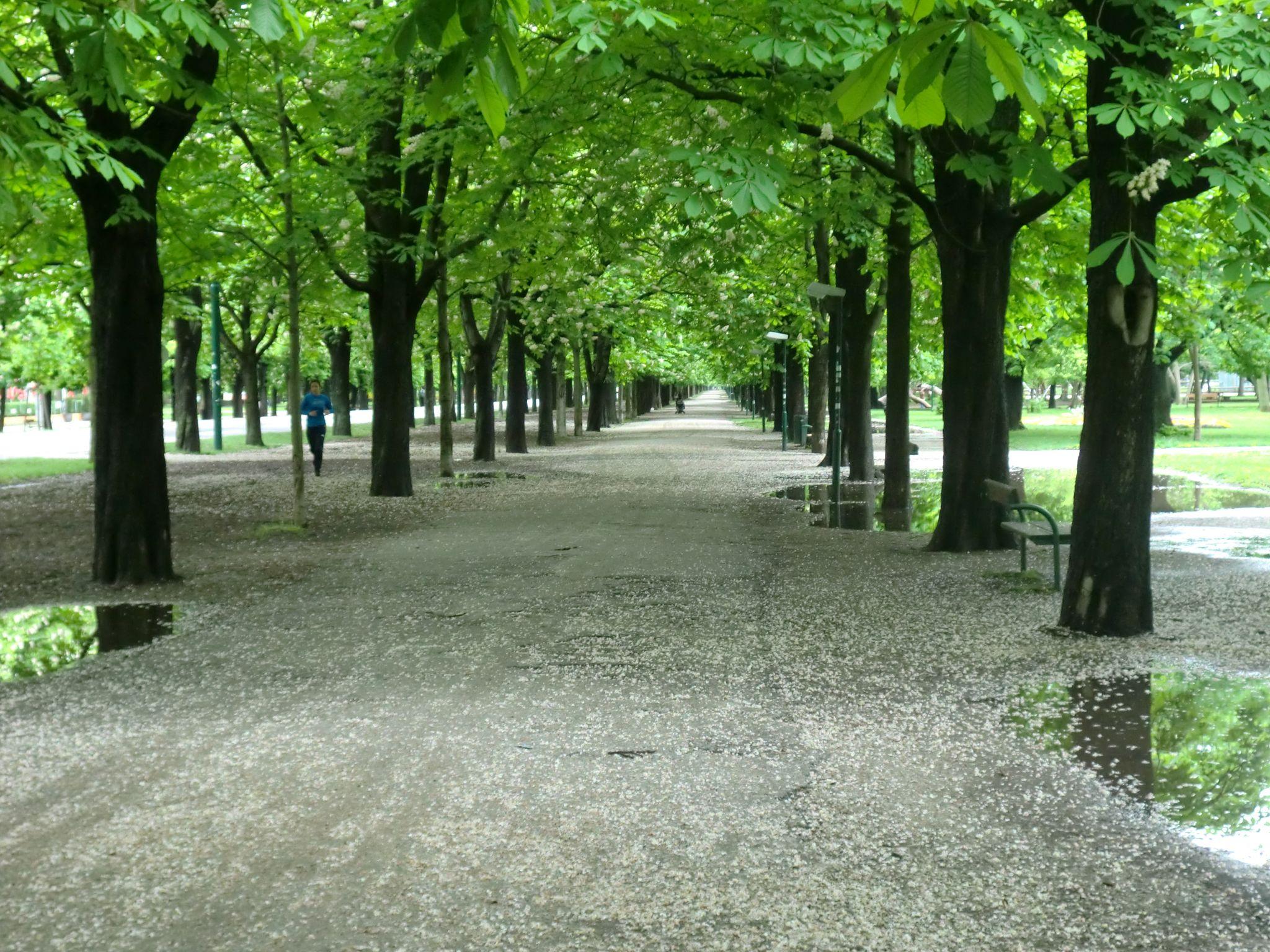 Vienna park 41 1440x1080 - Vienna: elegant beauty
