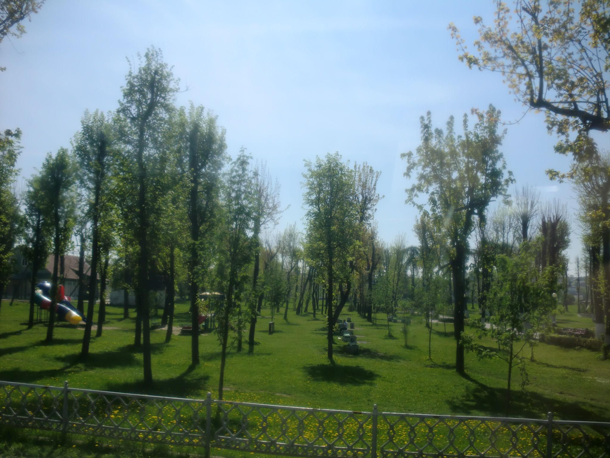 From Vilnius to Minsk by bus: trees