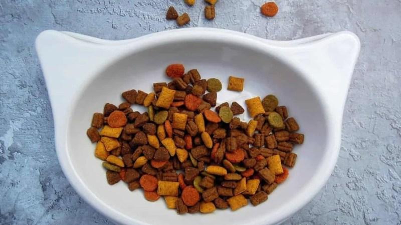 ¿La comida seca es saludable para mi gato?