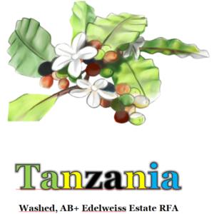Layout Tanzania washed