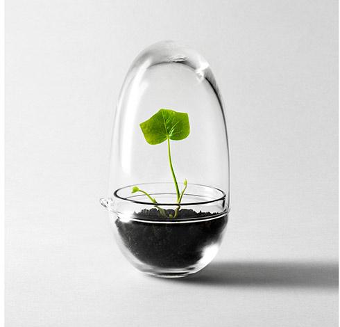 serre-en-verre-design