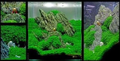 Mittelerde im Aquarium: Aquascaping liegt im Trend - my-fish