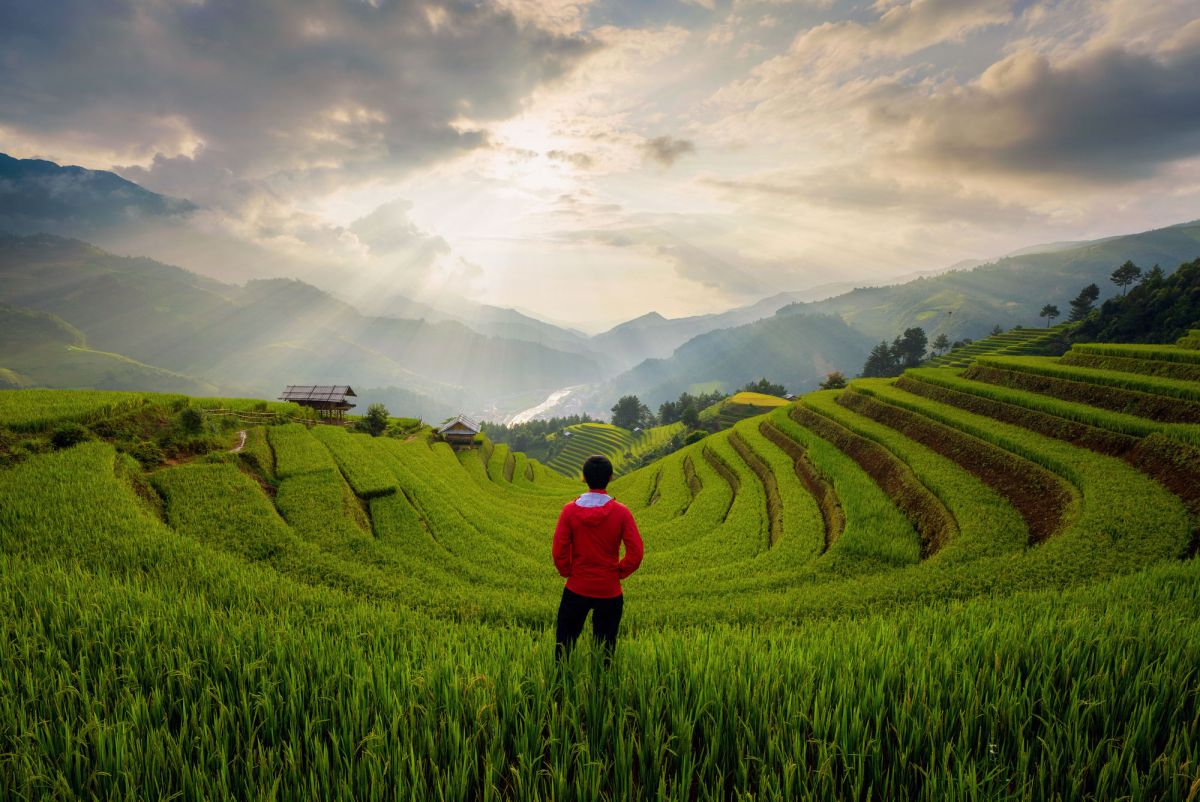 An Asian Man Watching At Paddy Rice Terraces Agricultural Fields In Countryside Of Mu Cang Chai Yen Bai Mountain Hills Valley On Summer In Travel T
