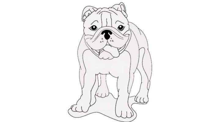 how-to-draw-a-bulldog_02