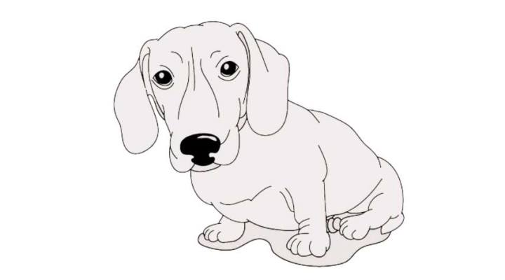 how-to-draw-a-daschund_11