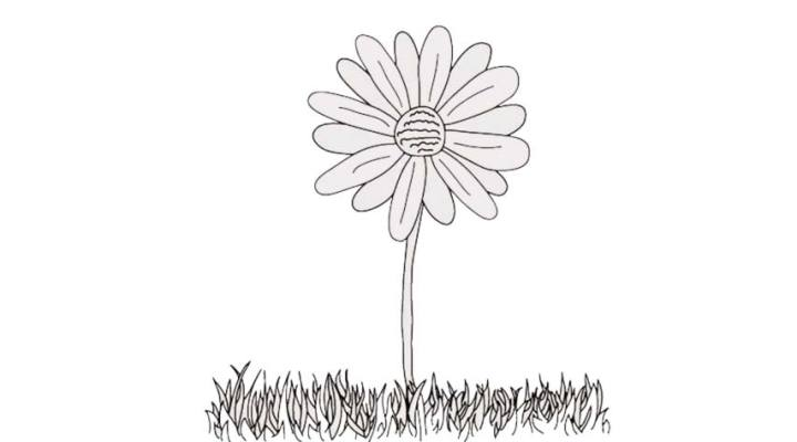 how-to-draw-a-daisy_08