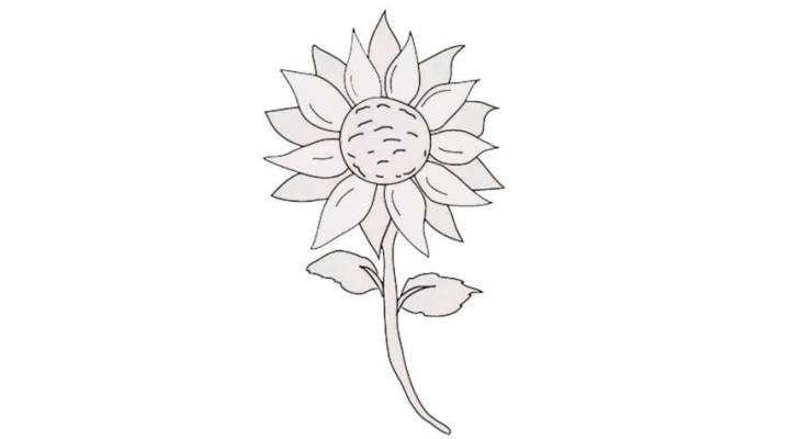 how-to-draw-a-sunflower_01