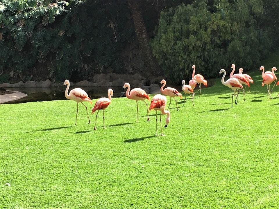 Tenerife Zoo