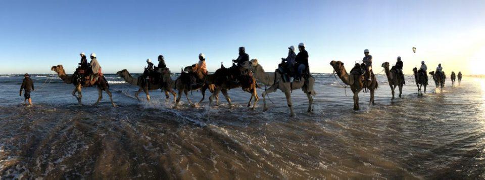 Sunset Camel Riding at Anna Bay