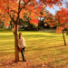 the best Autumn leaves in Sydney