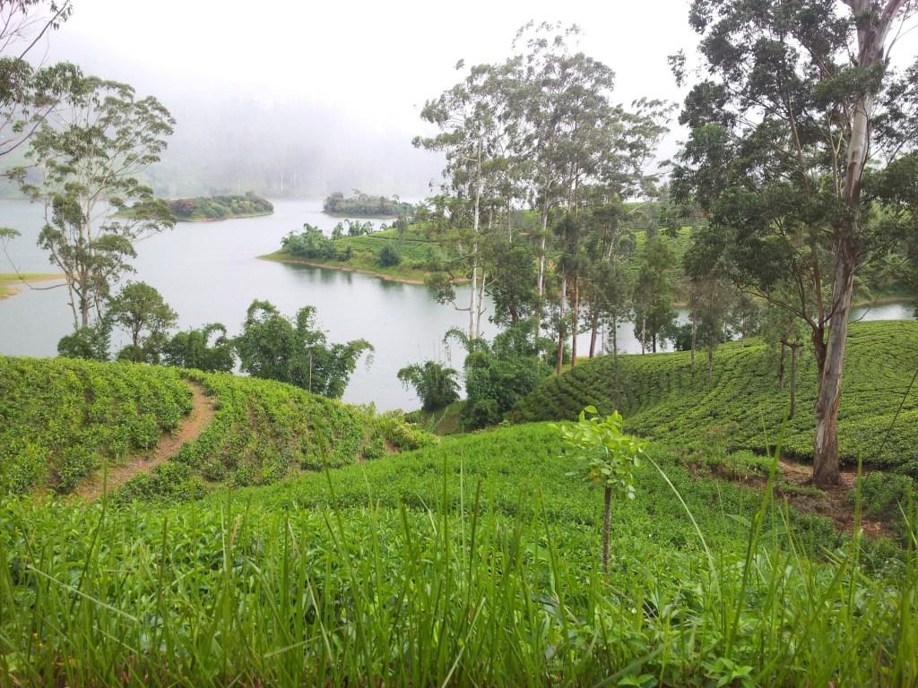 La Dalhousie au Sri Lanka