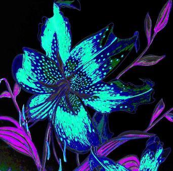 electric-blue-stargazer-laura-wilson