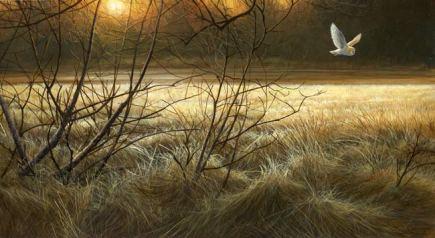 1040-Winter-Light-barn-owl-