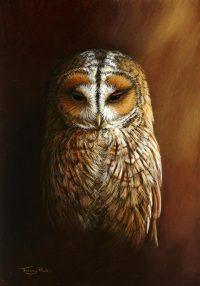 1281-Tawny-owl.jpg-nggid041392-ngg0dyn-200x300x100-00f0w010c010r110f110r010t010