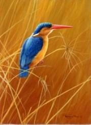895-malachite-kingfisher.jpg-nggid03891-ngg0dyn-200x300x100-00f0w010c010r110f110r010t010