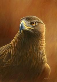 989-golden-eagle.jpg-nggid041034-ngg0dyn-200x300x100-00f0w010c010r110f110r010t010
