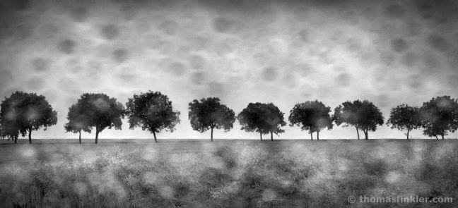 black-and-white-photography-fine-art-landscape-fine-art-nature-fine-art-photography-rainy-blurry-trees-most-beautiful-prints-for-sale