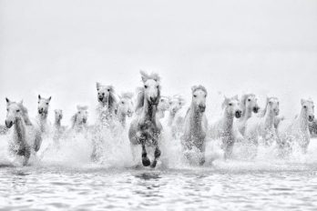 Ejaz-Khan-Earth-Horses-running-in-water-Inspired_D856708-600x400